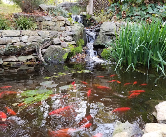 spring fish pond