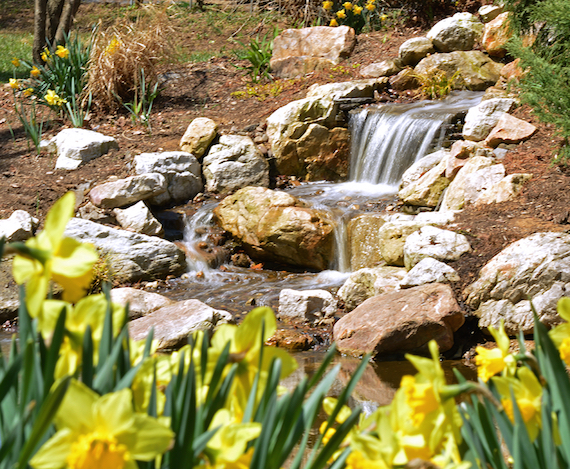 spring pondless